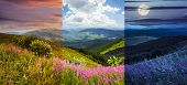 picture of mountain-high  - day and night collage of composite landscape with high wild grass and purple flowers on the top of high mountain - JPG