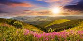 stock photo of mountain-high  - composite landscape with high wild grass and purple flowers on the top of high mountain in sunset light with rainbow - JPG