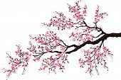 foto of cherry  - Branch of a blossoming cherry tree isolated on a white background - JPG
