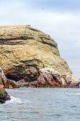 foto of ica  - Islas Ballestas - JPG