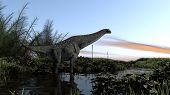 foto of apatosaurus  - titanosautus in swapm waters - JPG