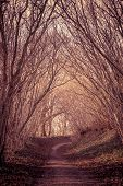 foto of mystery  - Path in a dark and mysterious forest - JPG
