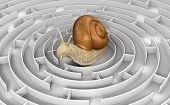 picture of three dimensional shape  - Image of Snail in maze - JPG