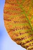 stock photo of dead plant  - Close up of a dead leaf in autumn - JPG