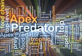 image of crocodilian  - Background concept wordcloud illustration of apex predator glowing light - JPG
