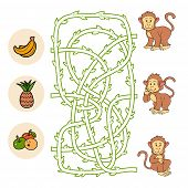 stock photo of marmosets  - Game for children - JPG