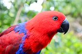 stock photo of tropical birds  - Parrot Tropical Bird with a Colroed Father - JPG