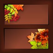 picture of rowan berry  - Vector autumn banners with rowan berry and maple fall leaves flowers grass - JPG