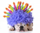 foto of dog birthday  - birthday dog  - JPG