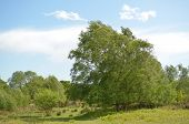 stock photo of common  - Chailey common at over 450 acres is one of Southern England - JPG