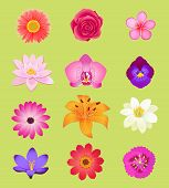 Постер, плакат: Flower Color Set Design Flat Isolated