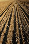 foto of farrow  - ploughed field - JPG