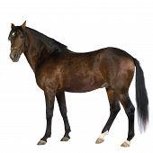 Постер, плакат: Лошадь