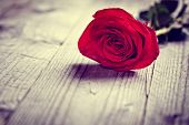 Red valentine rose on wooden background concept for love, valentines day, romance, thank you, celeb poster