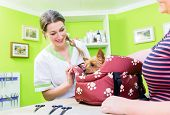 Woman brings cute little dog to dog parlour for grooming poster