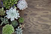 Succulent Plants For Garden poster