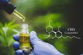 Cbd Hemp Oil, Formula Cbd Cannabidiol, Doctor Hand Hold And Offer To Patient Medical Marijuana And O poster