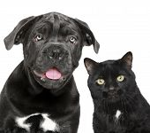 image of cat dog  - Dog and cat together - JPG