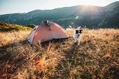 white shepherd dog and tent on mountain top at sunrise - camping with a dog, slow travel poster
