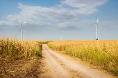Windmill Agricultural Landscape Background. Country Road In Corn Field With Windmills Landscape. Cor poster