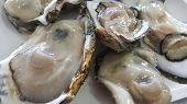 Group Of Raw Fresh Close Up Giant Open Oysters In A Shell Serving On The White Plate, Freshness Seaf poster