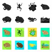 Vector Illustration Of Wildlife And Bog Symbol. Set Of Wildlife And Reptile Stock Vector Illustratio poster