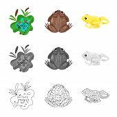Isolated Object Of Wildlife And Bog Icon. Collection Of Wildlife And Reptile Stock Vector Illustrati poster