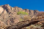 Brandberg Mountain Landscape In Place, With White Lady Rock Paintings. Namibia, Africa Wilderness poster