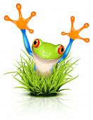 picture of orange frog  - Little tree frog on reflective grass - JPG