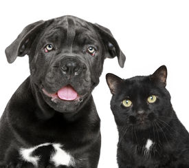 foto of cat dog  - Dog and cat together - JPG