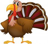 pic of angry bird  - Illustration of an angry turkey on a white background - JPG