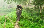 Elephant Safari In Chitwan Forest Nepal