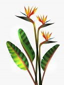 pic of jungle birds  - Bird of Paradise flower isolated over white background - JPG