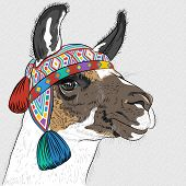 stock photo of alpaca  - vector sketch of Alpaca smiling in knitted Peruvian hat - JPG