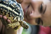 stock photo of turtle shell  - Woman hold in hand a turtle - JPG