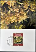 stamp printed in Liechtenstein dedicated to mosses and lichens shows sphagnum palustre