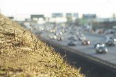 stock photo of dead plant  - dead plants near a road with a busy traffic shot with blurred foreground and background concept of environment - JPG
