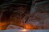 picture of petra jordan  - Tree illuminated by candle along the trail in Petra Jordan at night - one of most beautiful sites in middle east ** Note: Soft Focus at 100%, best at smaller sizes - JPG