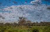foto of swarm  - Huge swarm of hungry locust in flight near Morondava in Madagascar