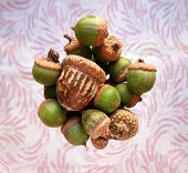 picture of swirly  - Bright tabletop view of group of green acorns with one distressed brown acorn, in a blurred wine glass, set on a pink, swirly, dotted cloth napkin.