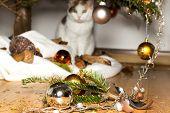 image of innocent  - A cat looks innocent at broken christmas decoration - JPG
