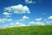 foto of buttercup  - landscape background with buttercup meadow and cloudy blue sky - JPG