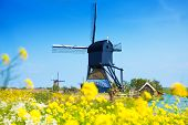 foto of water-mill  - Old water pumping mill through the spring yellow flowers  in Kinderdijk - JPG