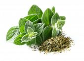stock photo of oregano  - Fresh and dried oregano spices - JPG