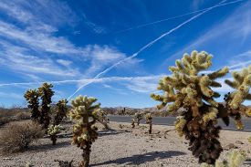 picture of chola  - Landscape in Joshua tree NP with strange airplane trails covering the blue sky - JPG