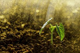 stock photo of land development  - Green seedling growing on the ground in the rain  - JPG