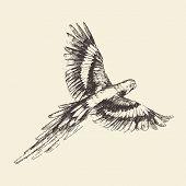 foto of parrots  - Parrot vintage engraved illustration - JPG