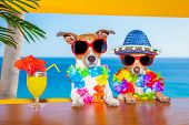 image of dog birthday  - funny cool couple of dogs drinking cocktails at the bar in a beach club party with ocean view on summer vacation holidays - JPG