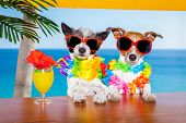 picture of dog birthday  - funny cool couple of dogs drinking cocktails at the bar in a beach club party with ocean view on summer vacation holidays for honeymoon trip - JPG