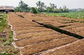 stock photo of tobacco barn  - leaf Tobacco farmers and producers in Thailand - JPG